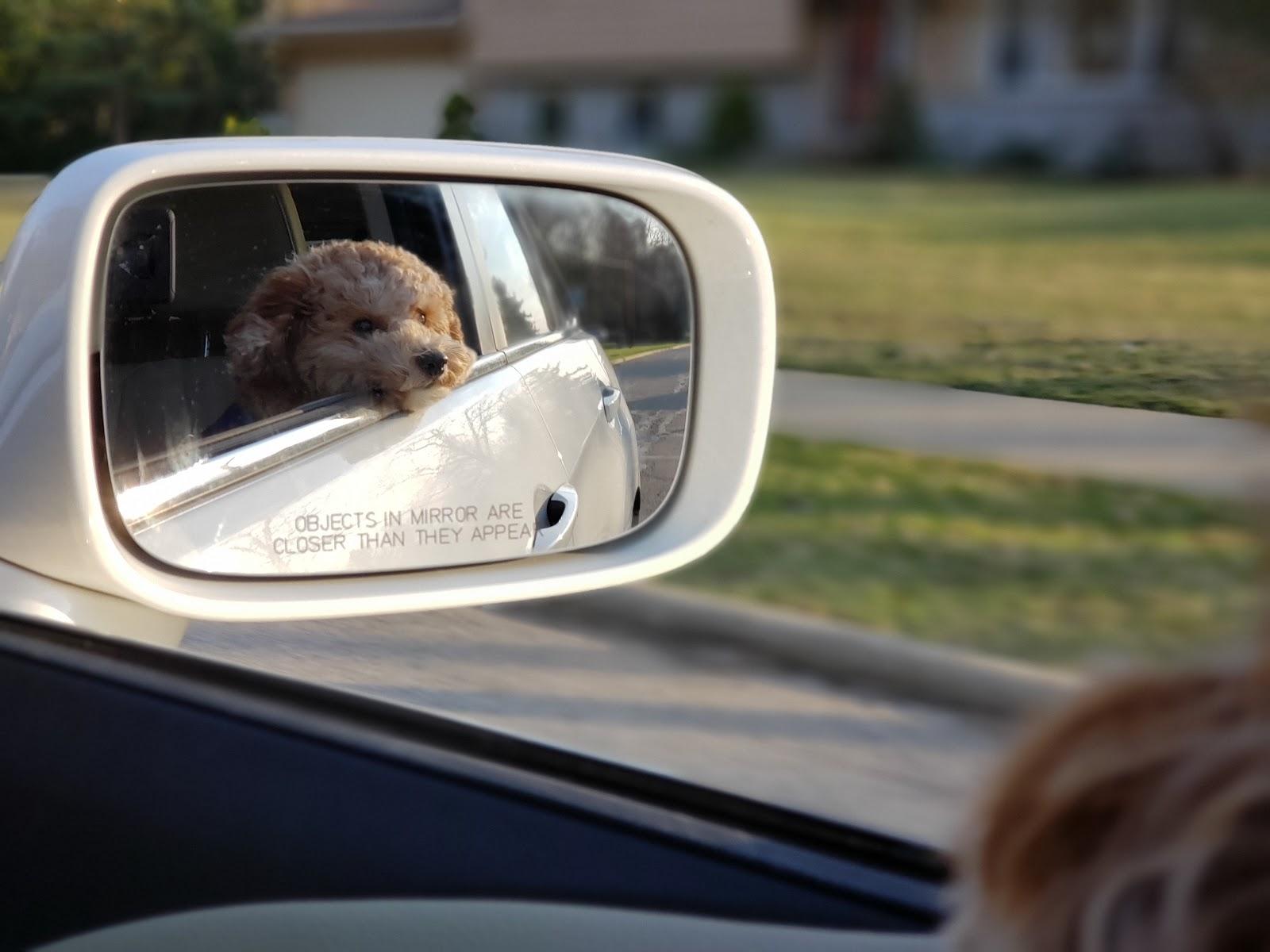 Cachorro apoiando foucinho na janela do carro em frente ao retrovisor em uma corrida Uber e 99