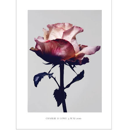 SPRING ROSE ARTPRINT