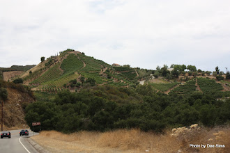Photo: (Year 3) Day 30 - Vines on the Slopes of the Mountains