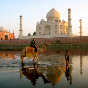 Taj Mahal camel by Eason Jordan - Landscapes Travel