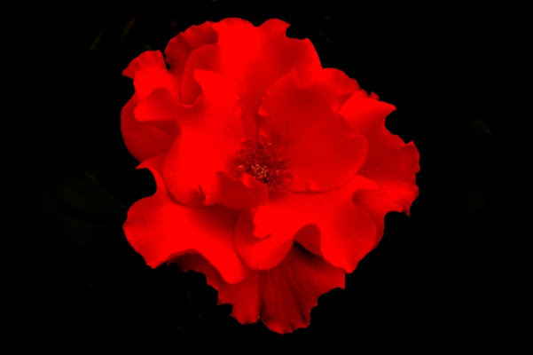 Rosso di borgio