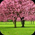 Sakura Video Wallpaper 3D icon