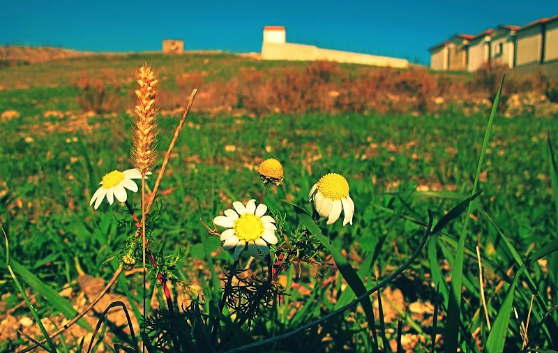 A filo d'erba. di Francesco Abate