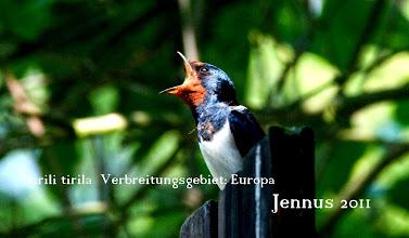 Photo: tirili tirila   Verbreitungsgebiet der Rauchschwalbe ist ganz Europa