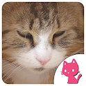 Beautiful Cat images icon