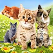 Garden of Cats Live Wallpaper