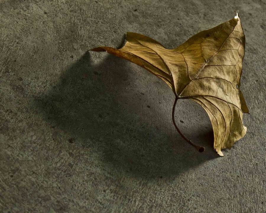 by Kierah Cattley - Nature Up Close Leaves & Grasses ( fall leaves on ground, fall leaves )