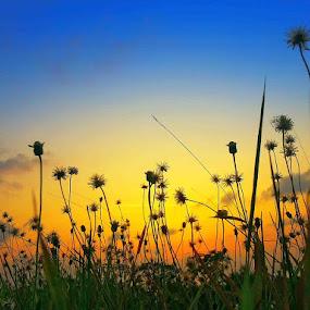 Dandelion Sunset by Alit  Apriyana - Instagram & Mobile Android