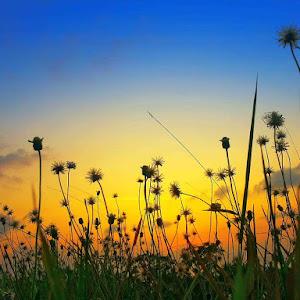 Dandelion Sunset_188.JPG