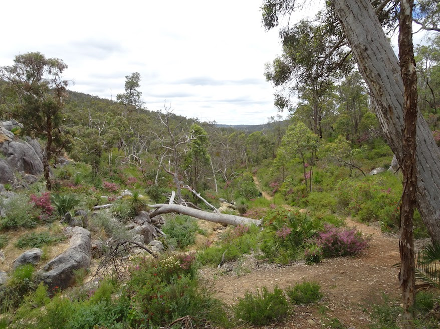 Walking in the Perth Hills
