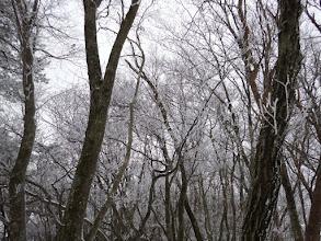 霧氷の中を進む