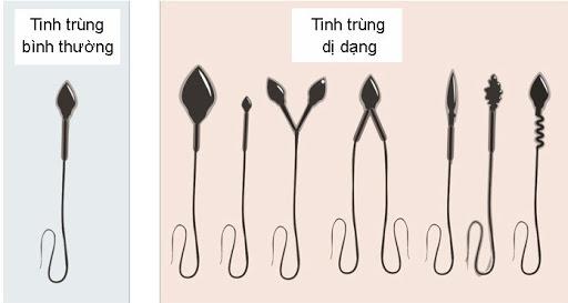 nhung-dieu-can-biet-ve-tinh-dich-do