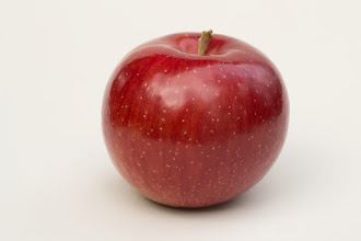 Photo: 'Beacon' apple developed by the University of Minnesota Agricultural Experiment Station.  Released in 1936.  Bright red apple with soft, juicy flesh and a slightly tart flavor.  The tree is hardy, vigorous, and susceptible to fire blight.    Ripens mid- to late-August in Minnesota.