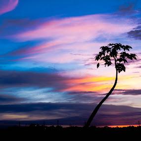 tree of papaya by Putu Anggara - Landscapes Sunsets & Sunrises ( papaya, sunset, sillouete )
