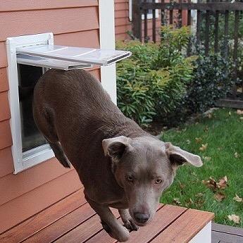 Endure double flap pet door