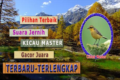 Kicau Ciblek Sawah Pikat - náhled