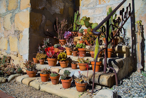 succulent garden at Mission Santa Barbara by Kathy Dee - Backgrounds Nature ( succulent, stairs, santa, cacti, colorful, mission, steps, pots, sacred, barbara, garden )