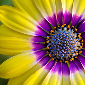 G2 by Mark Ritter - Flowers Single Flower ( macro, beauty, garden, closeup, floral, flower )