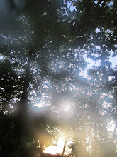Photo: Dreamy photo of sunset sunlight filtering through trees at Eastwood Park in Dayton, Ohio.