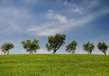 a field with a line of trees on a sunny day