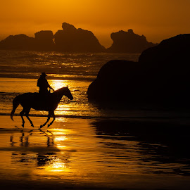 Horse silhouette at sunset by Nathan G - Landscapes Sunsets & Sunrises ( horse, bandon, sunset, beach, oregon coast, oregon, water )
