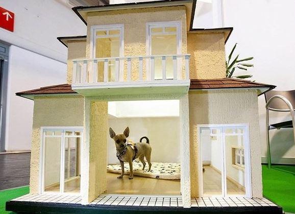 Dog House Design Screenshot