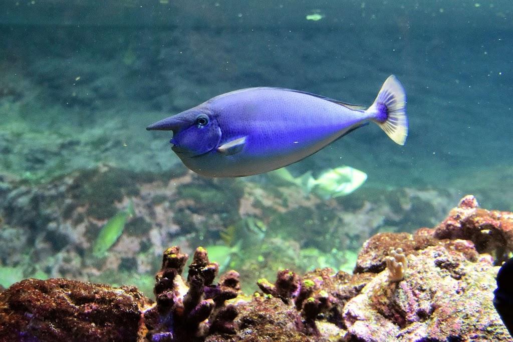 un sacco di forum di pesce risalente