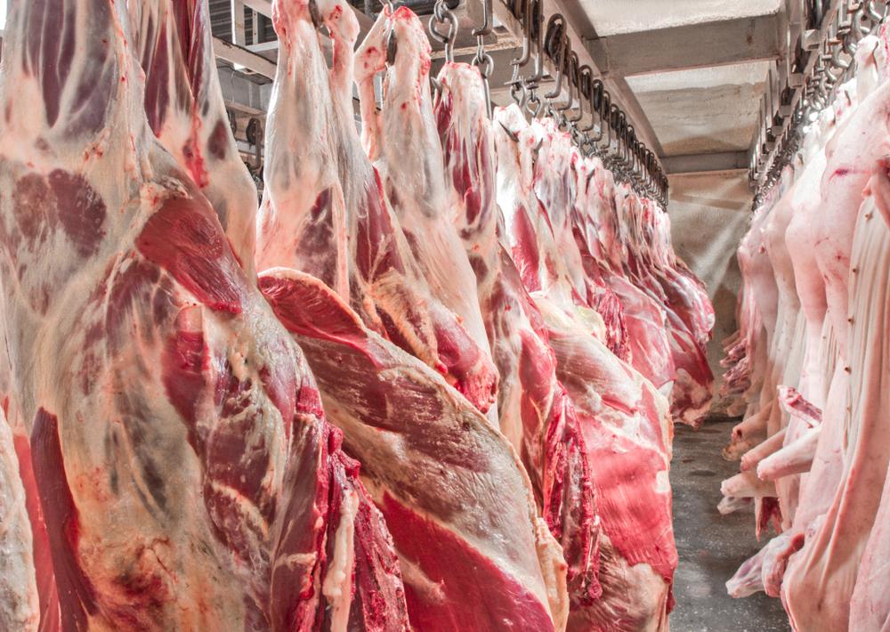 Mesmo com baixa letalidade, novas cepas de PSA desaceleram produção de carne suína na China. (Fonte: Evgeniy Gorbunov/Shutterstock)