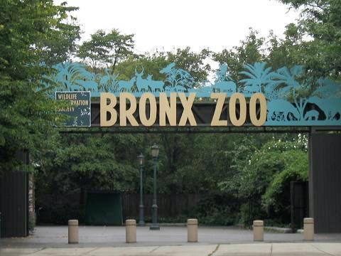 Photo Zoo du Bronx