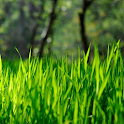 grass live wallpapers icon