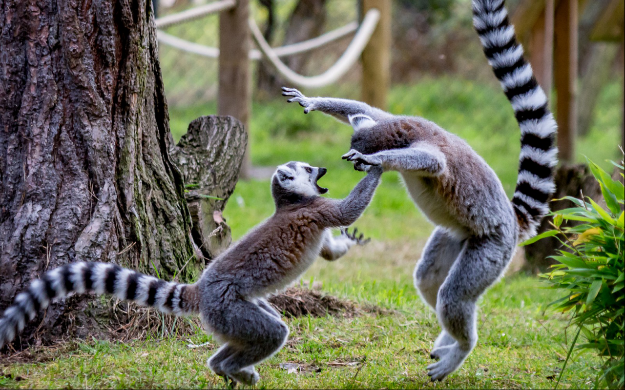 jigsaw puzzles wild animals android apps on google play