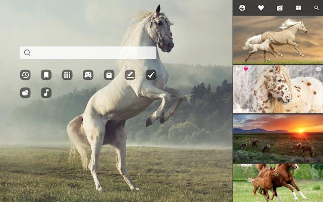 My Horses Beautiful Horse Hd Wallpaper