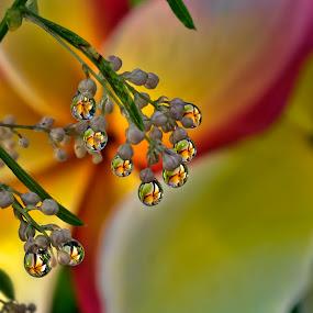 Flower Berries by Margie MacPherson - Nature Up Close Natural Waterdrops ( plumeria, water, fern, water drops, macro, maui, nature, maui up close, green, asparagus fern, pink, yellow,  )