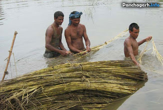 Photo: Farmers preparing Jute fiber