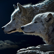 Teen Wolf Wallpaper Android Apk Free Download Apkturbo
