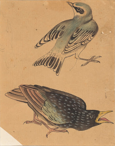 Painting showing two sparrows