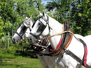 Photo: Meravigliosi cavalli della nostra fattoria