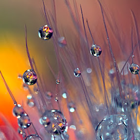 by Carlos De Sousa Ramos - Abstract Water Drops & Splashes