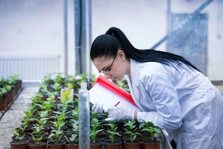 Proprietary chemovars (new plant varieties)