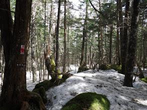 前茶臼山山頂