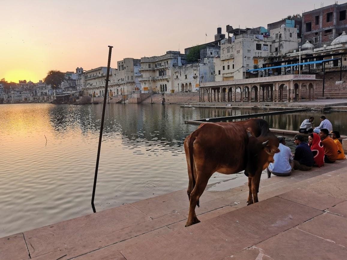 que hacer en Pushkar