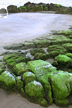 Photo: algae-covered rocks on Hat Sai Ree beach, Chumpon