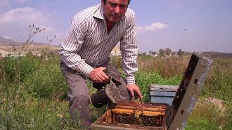 Un apicultor almeriense supervisando las colmenas de su propiedad.