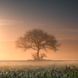 Lonely tree by Luka Balković - Landscapes Prairies, Meadows & Fields ( blue sky, sunshine, white clouds, tree, prairie, mist, morning, spring, agriculture, lonely tree, sunlight, field, light, dew, perspective, wheat, lonely, meadow, landscape )