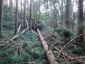 倒木が道を塞ぐ