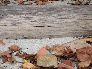 Photo: Hermit crab highway