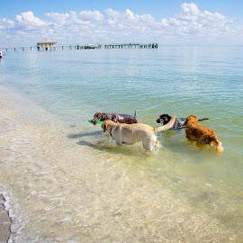 gathering by Meaghan Browning - Animals - Dogs Playing