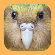 App Icon for Birds of New Zealand App in Czech Republic Google Play Store