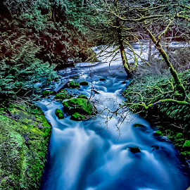 by Keith Sutherland - Nature Up Close Water ( mossy, canada, nature, flowing water, long exposure, river, trees )