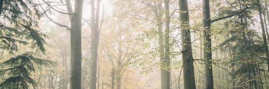 Healing Walk in Tatton Park Knutsford